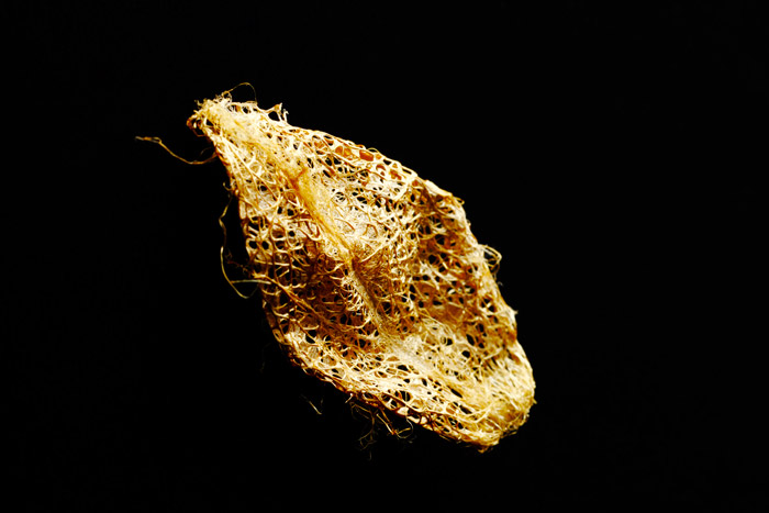 インドネシア産の黄金のまゆ