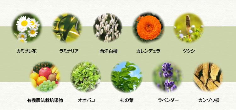 10種類のハーブ