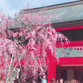 京都 神社